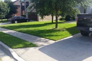 Photo #1: PREMIUM YARD SERVICES. AFFORDABLE PRICES STARTING  $20 & UP