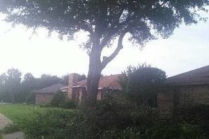 Photo #1: Trees service - any kind of tree! Call Jesus!