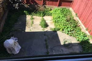 Photo #1: Gardening /Cleanouts