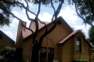 Photo #1: ****SANCHEZ'S TREE SERVICE*****