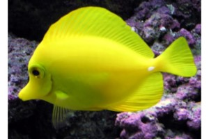 Photo #1: Aquarium Service, Aquarium Leasing, Aquarium Maintenance (northtexasaquarium)