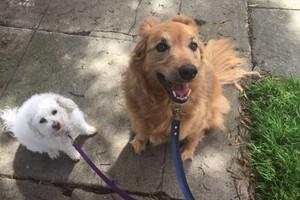 Photo #1: Devoted & Trustworthy Pet Sitter, Dog Walker - Reasonable Rates $25!