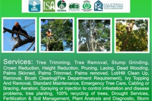 Photo #1: Efficient, professional work - Your Way Tree Service Inc.
