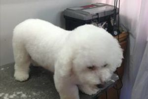 Photo #1: PET GROOMING PROFESSIONAL WORK AFFORDABLE PRICES DISCOUNTS NEW CLIENTS