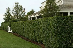 Photo #1: Landscape Design. Residential or Commercial