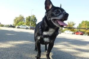 Photo #1: Dog Walking / GPS Tracked / Yard Pooper Scooper