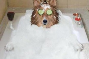 Photo #1: PUPPY SUDS dog grooming and bathing