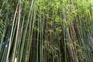 Photo #1: Bamboo removal and containment