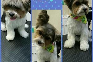 Photo #1: Dog Walker & Pet Grooming