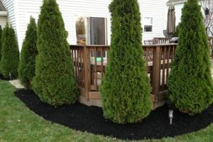 Photo #1: GARDEN CARE / FORCLOSURE CLEAN-UPS