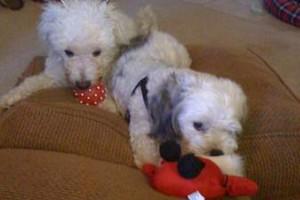 Photo #1: Small Dog overnight care