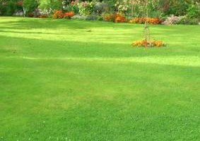 Photo #1: LA GARDENING / LAWN SERVICES (All Types)