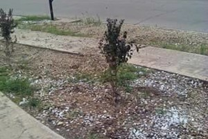 Photo #1: Affordable professional landscaping