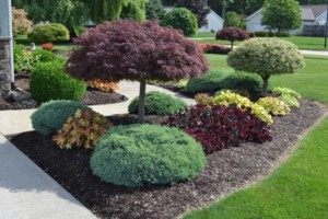 Photo #1: Macaluso Landscaping company