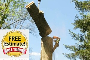 Photo #1: Bill Mann's Tree Removal and Landscaping Services