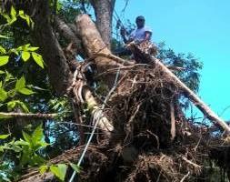 Photo #1: Tree service