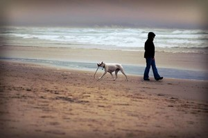 Photo #1: Dog Walker Available East Rogers Park