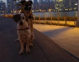 Photo #1: Dog Walker/Pet Sitter - New York City