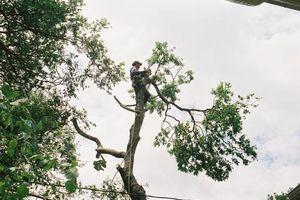 Photo #1: Austin TX Tree Service