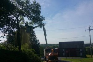 Photo #1: Free estimates for tree service and property clean up