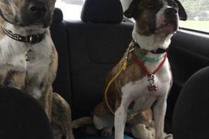 Photo #1: Dog training and Rehabilitation