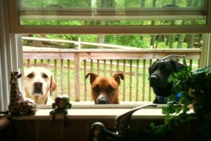 Photo #1: FAMILY HOME DOG BOARDING. DOG BOARDING IN A HOUSE
