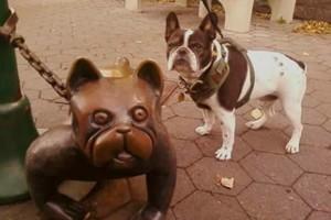 Photo #1: Dog Walking & Pet Care ( PEPPIE PAWS PET CLUB)