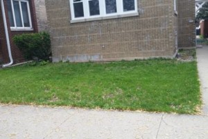 Photo #1: Landscaping & Low Cost Grass Cutting