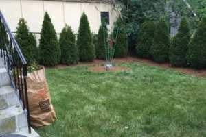 Photo #1: Landscaping arborvitae and planting specials!!
