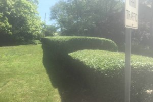 Photo #1: Expert pruning & Summer weed control. Mowing, Natural mosquito remedies