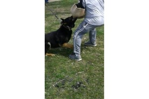 Photo #1: HOME PROTECTION K-9 TRAINING