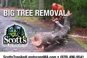 Photo #1: BIG Tree Removal
