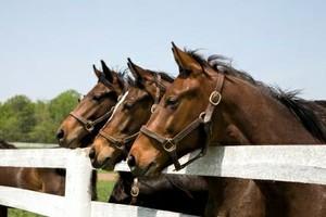 Photo #1: HORSE CORRALS INSTALLATION UPGRADES & REPAIRS.