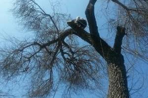 Photo #1: TREE TRIMMING , TREE REMOVE ,TREE SERVICE