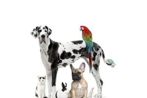 Photo #1: Astoria Veterinary Group