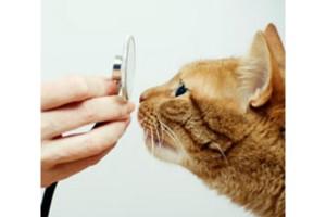 Photo #1: Brooklyn Cares Veterinary Clinic