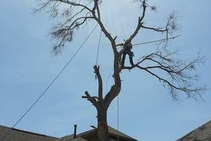 Photo #1: Tree Trimming, Removal, Replacement