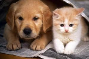 Photo #1: Beverly Robertson Veterinary Clinic