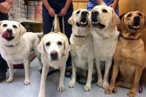 Photo #1: Park La Brea Veterinary Care