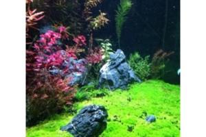 Photo #1: Monster Aquarium