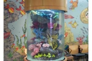 Photo #1: Blue Planet Aquarium Services