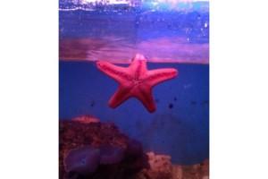 Photo #1: Lucky Ocean Aquarium