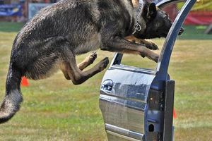 Photo #1: K9 Police Dog Training CALL TODAY for special OFFER