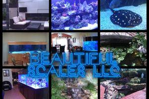Photo #1: Aquarium and pond maintenance/installation