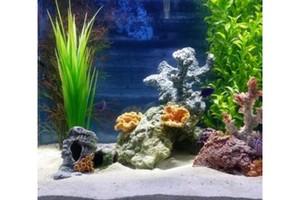 Photo #1: Aquatic Start - Professional Aquarium Maintenance
