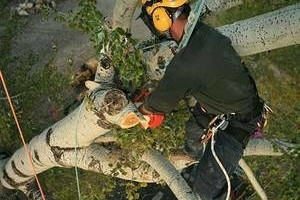 Photo #1: Tree consultants - Complete management services