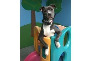 Photo #1: Mini Mondays Daycare at Canine Kindergarten