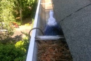 Photo #1: Gutter and Downspout Cleaning