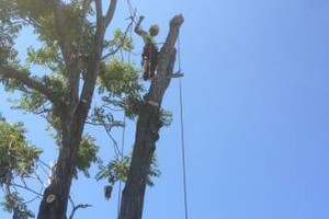 Photo #1: Tree Removal/Stump Grinding/Pruning