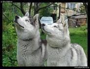 Photo #1: DOG WALKER & RUNNER - makes 'em HAPPY ( behavior problems ?)